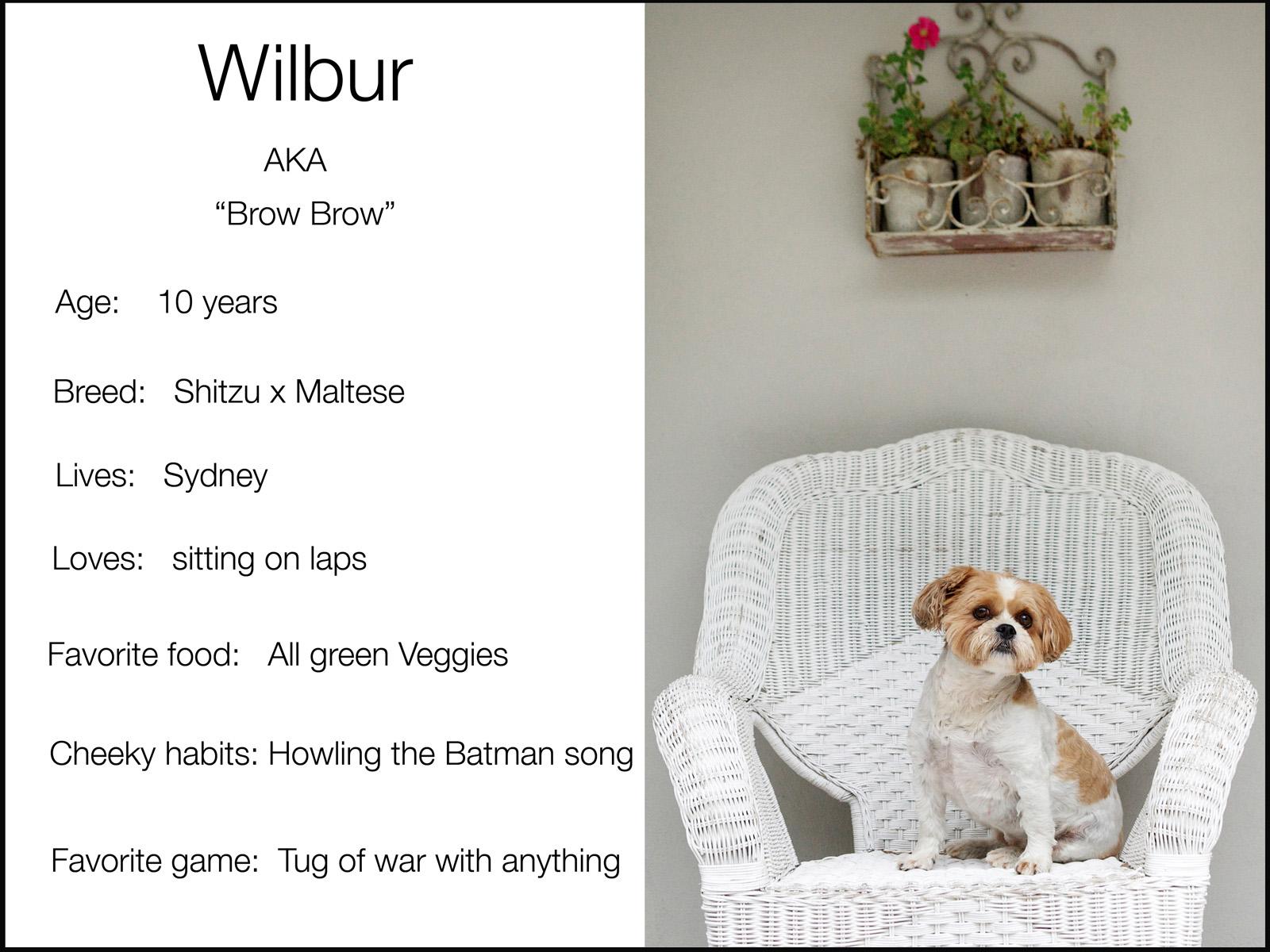 Black wilour blurb copy