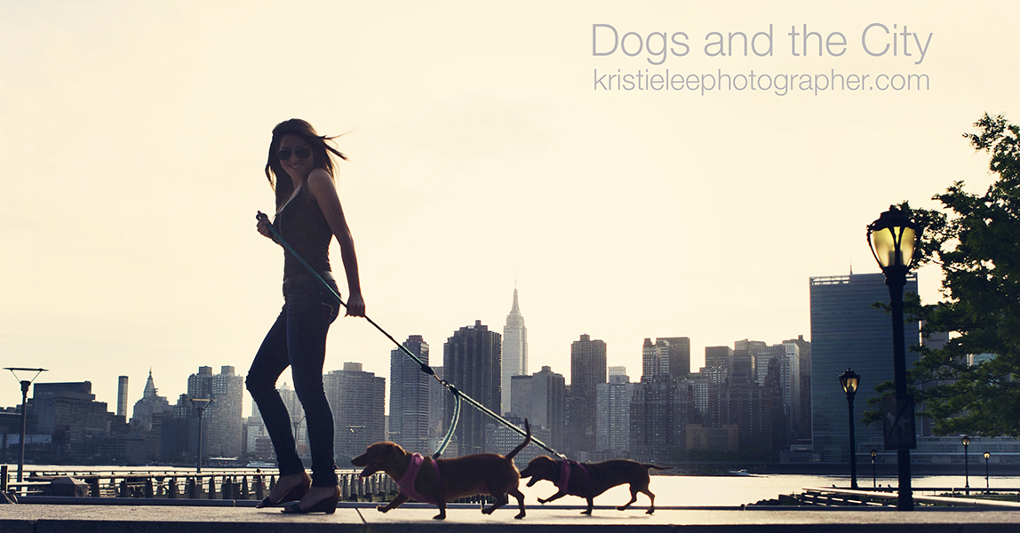 Dogsandthecity cover photo logo