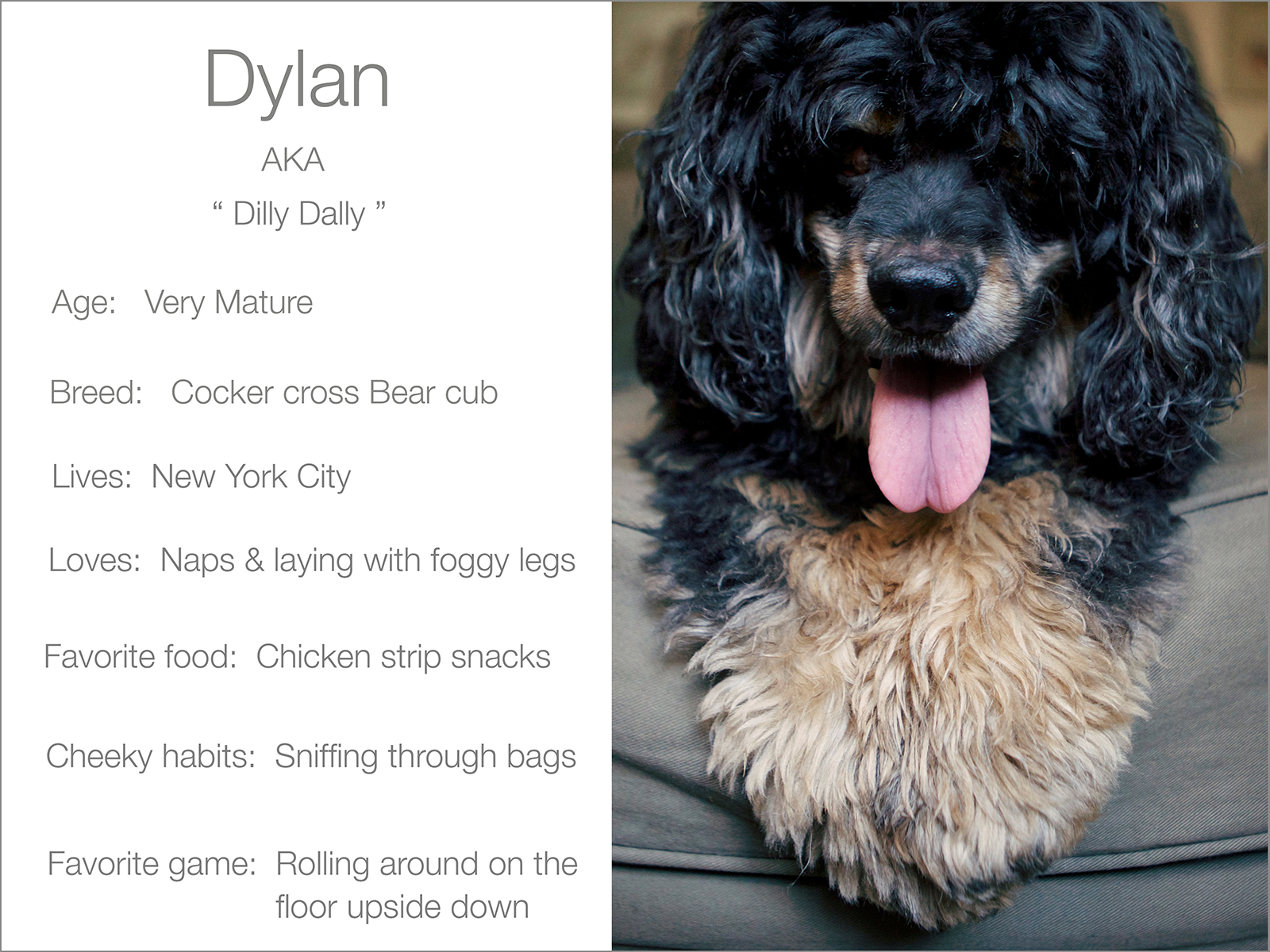 Grey Dylan blurb