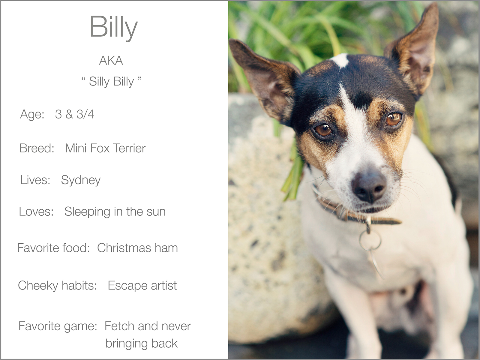 Billy blurb