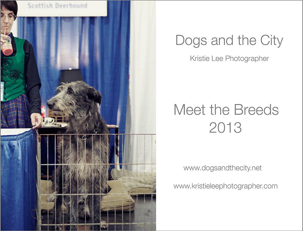 1 Meet the breeds 2013