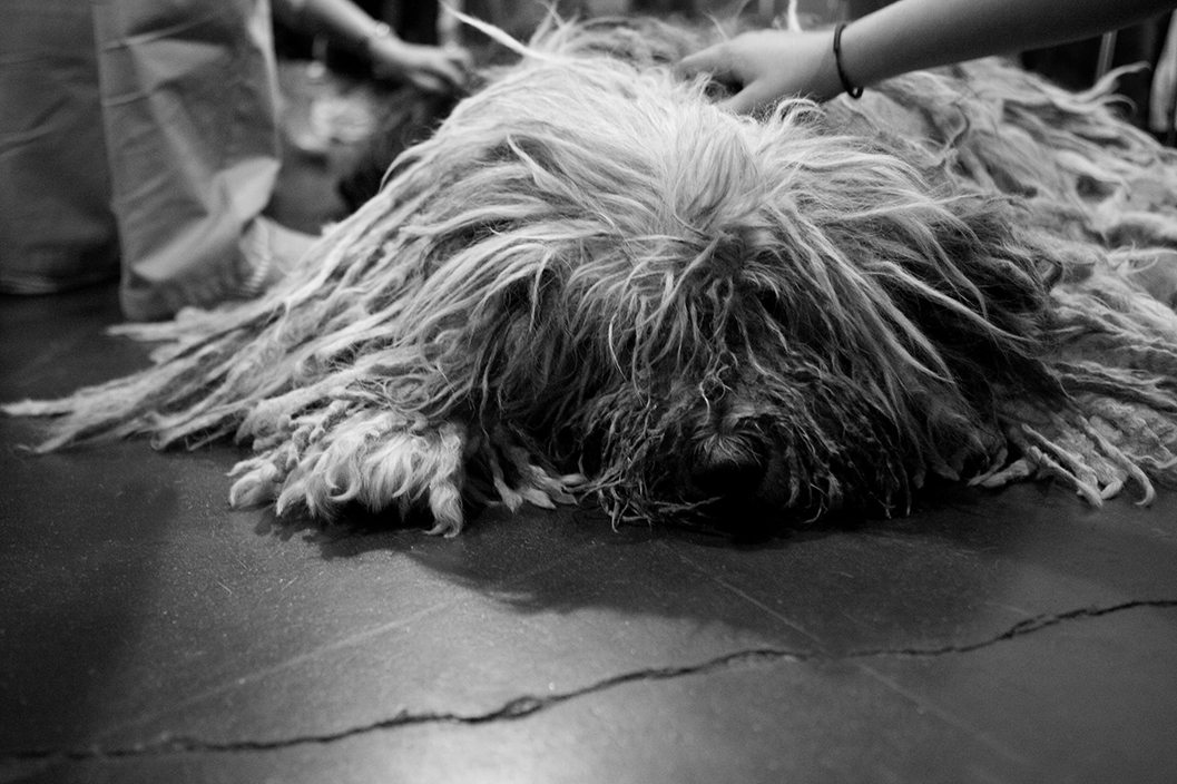 Bergamasco Kristie Lee B&W