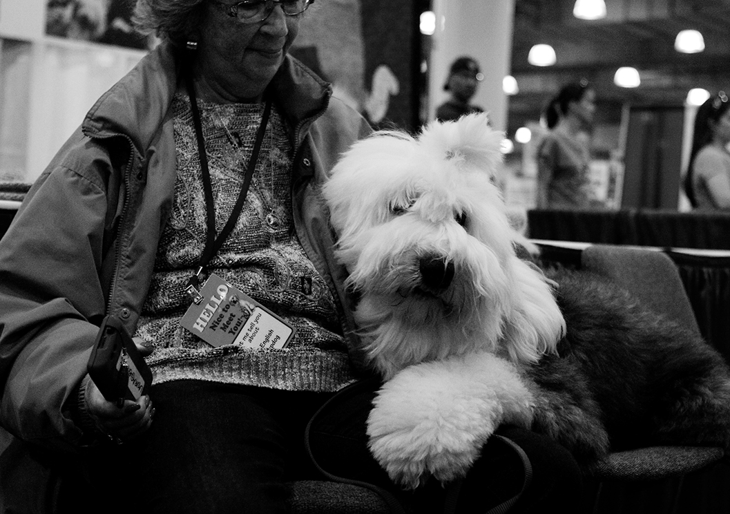 sheep dog kristie lee B&W