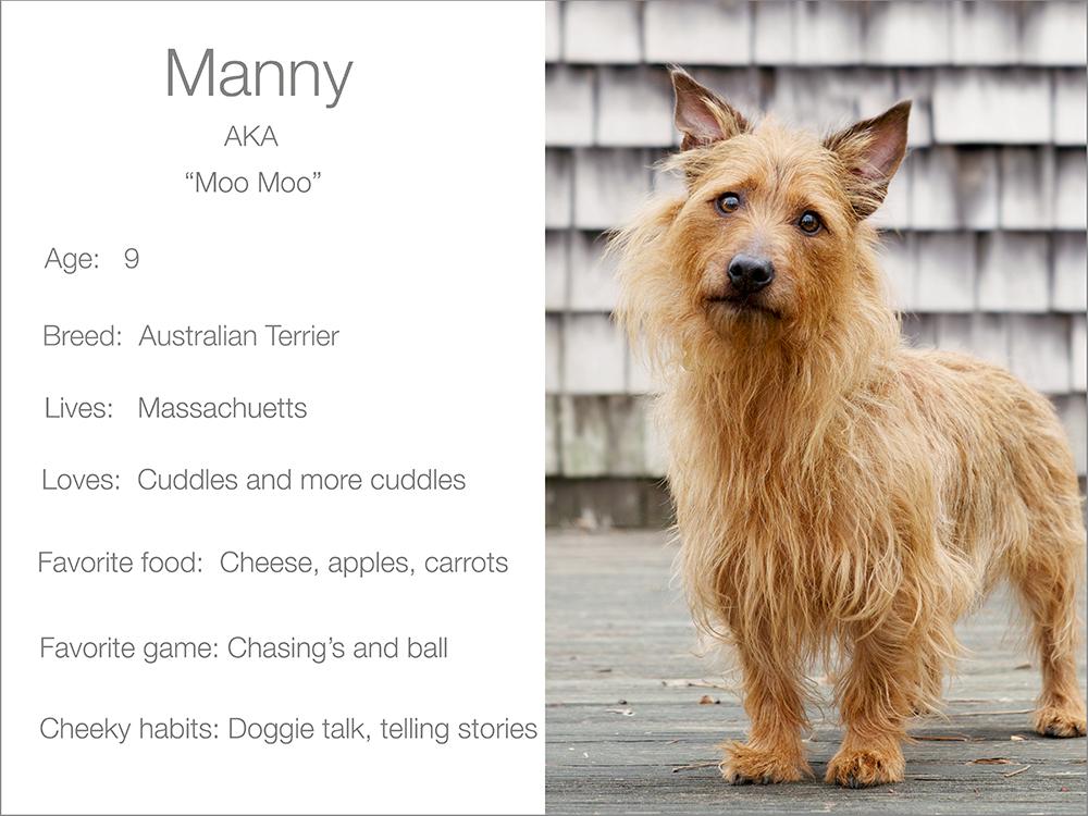 Dogsandthecity Manny