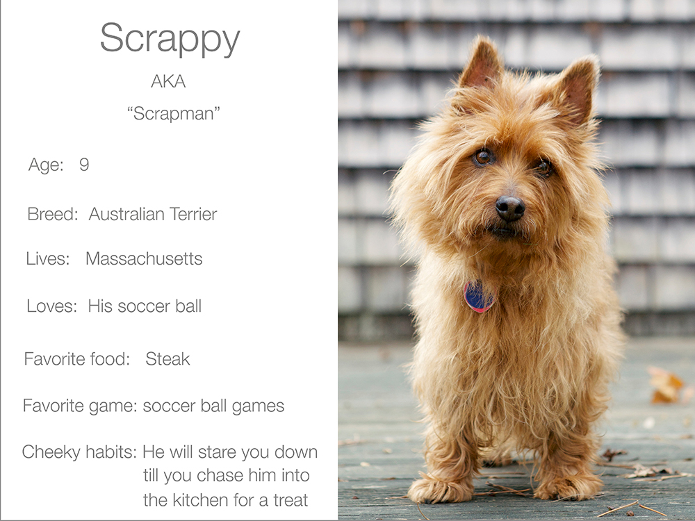 Dogsandthecity Scrappy
