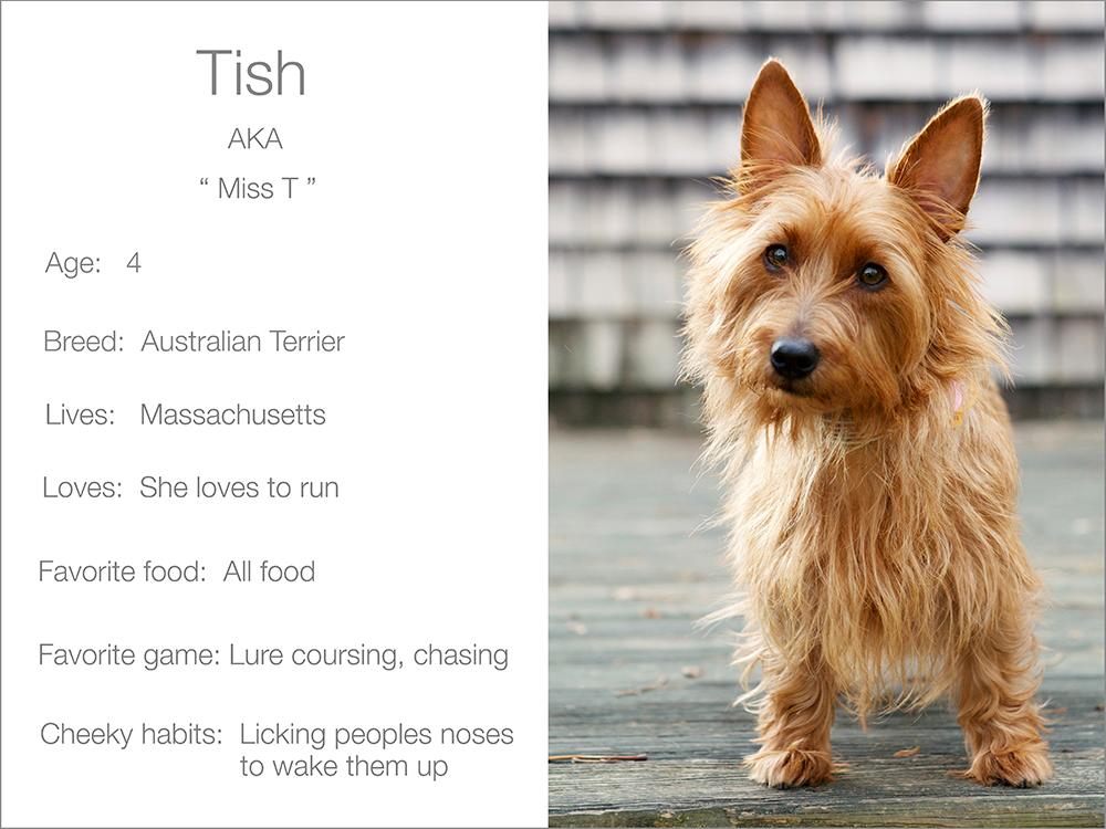 Dogsandthecity Tish