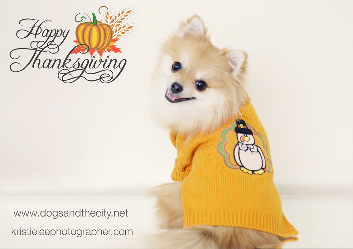 Happy thanksgiving Kristielee Photographer L
