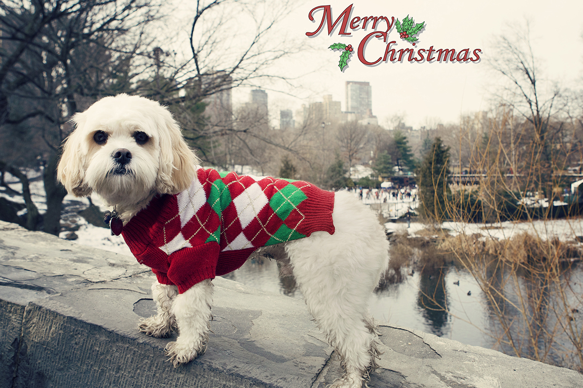 Dogs and the City Merry Christmas copy