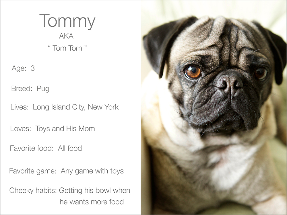 Tommy profile dogs and the city
