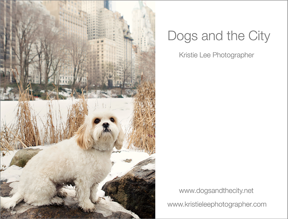 dogs and the city kristie lee photographer