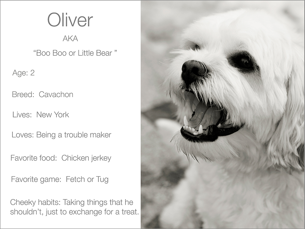Oliver profile  Kristie Lee Photographer