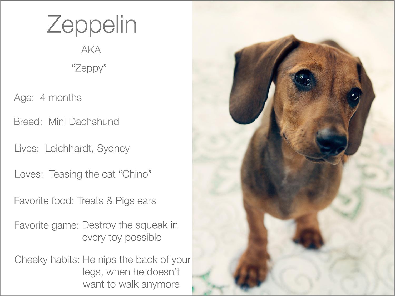 Zeppelin's profile  Kristie Lee Photographer