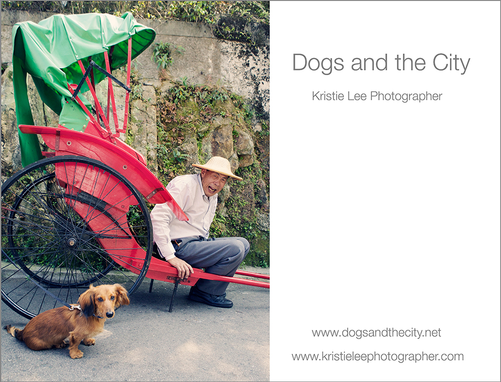dogs and the city kristie lee photographer teddy