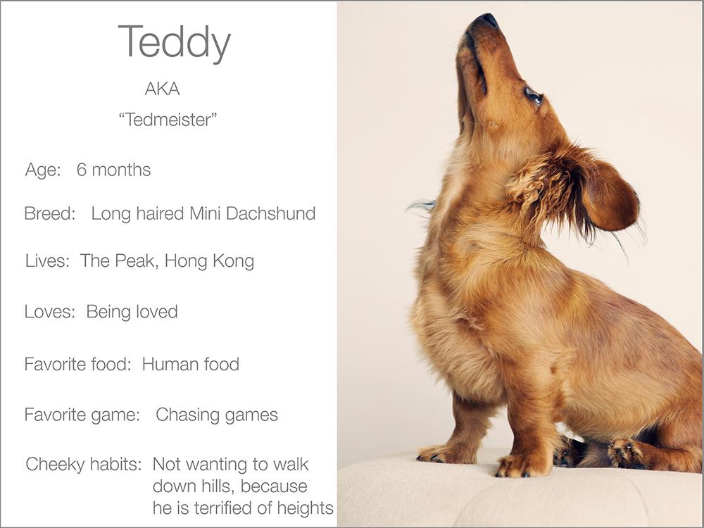 profile  Kristie Lee Photographer teddy