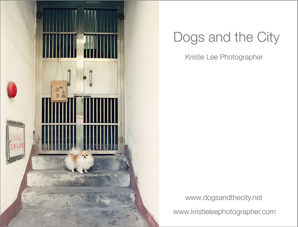dogs and the city kristie lee photographer cotton Candy