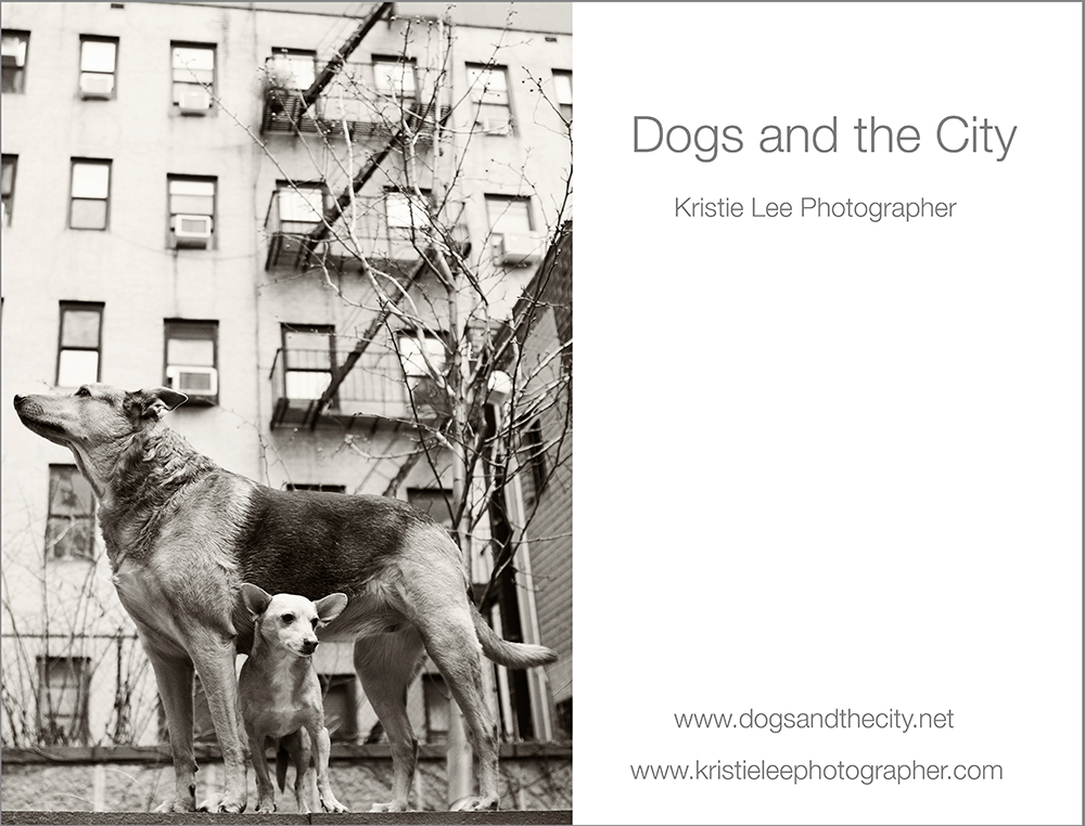 dogs and the city kristie lee photographer Misty & Seb