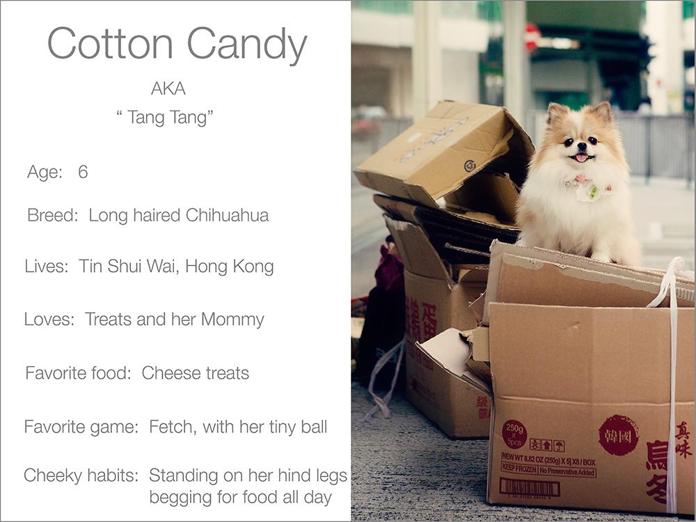 profile  Kristie Lee Photographer cotton Candy