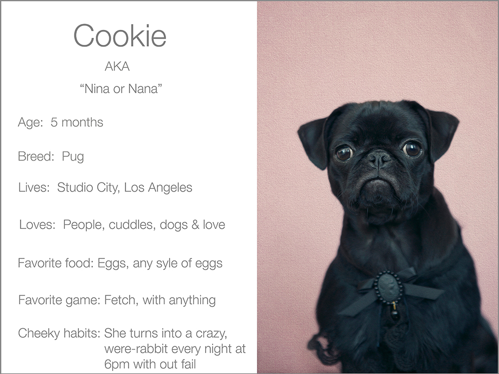 Cookie profile  Kristie Lee Photographer