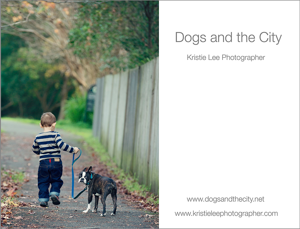 dogs and the city kristie lee photographer gussy