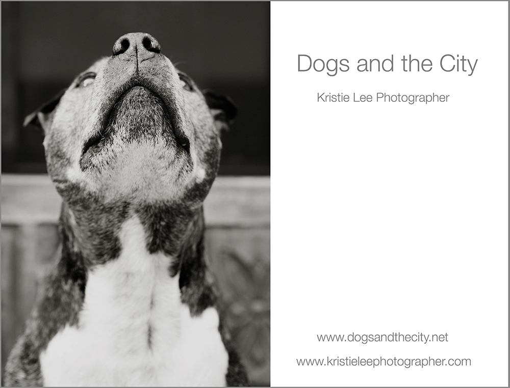 dogs and the city kristie lee photographer Mason