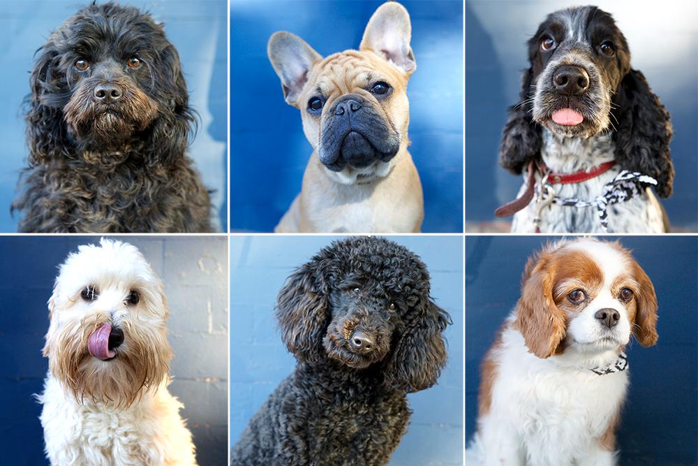 Dogue dogs Kristieleephotographer