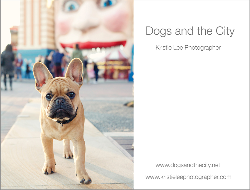 dogs and the city kristie lee photographer Beau