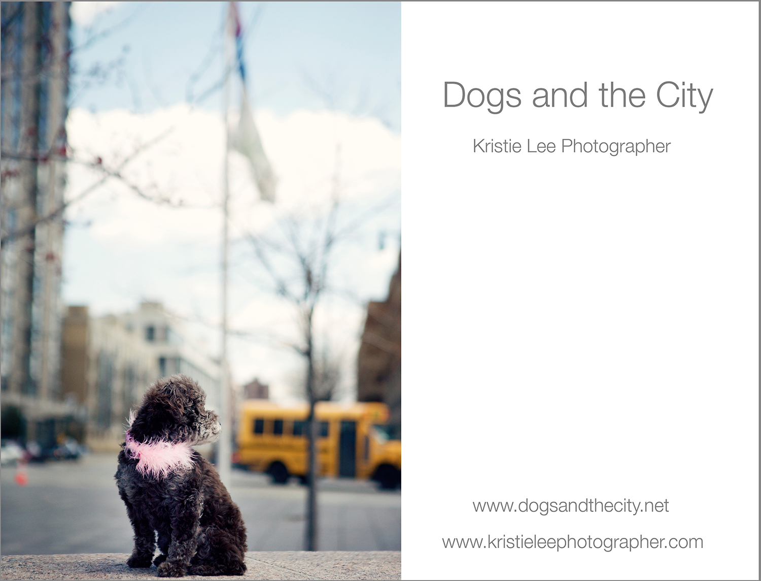 dogs and the city kristie lee photographer lacey