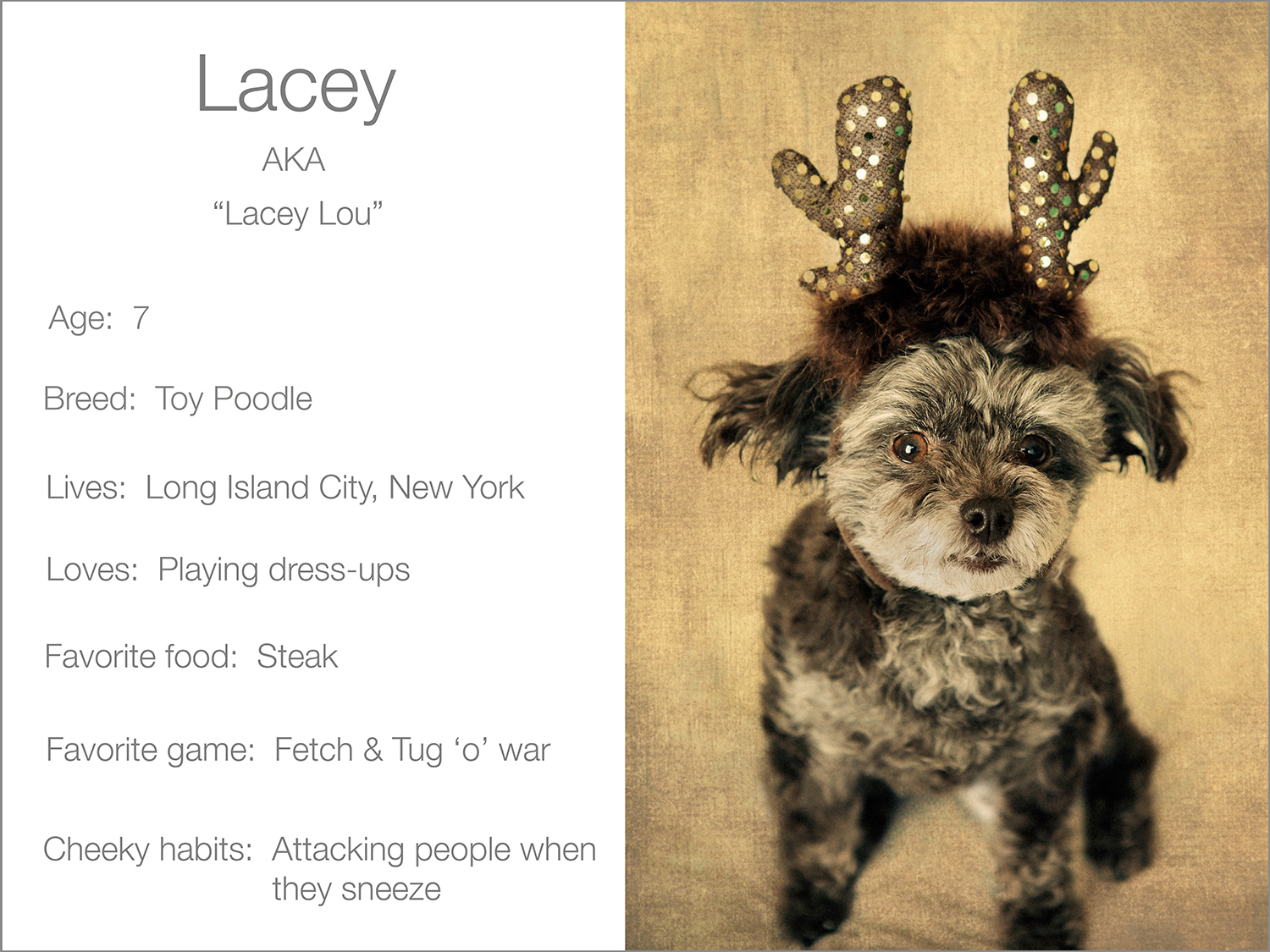 Lacey profile  Kristie Lee Photographer