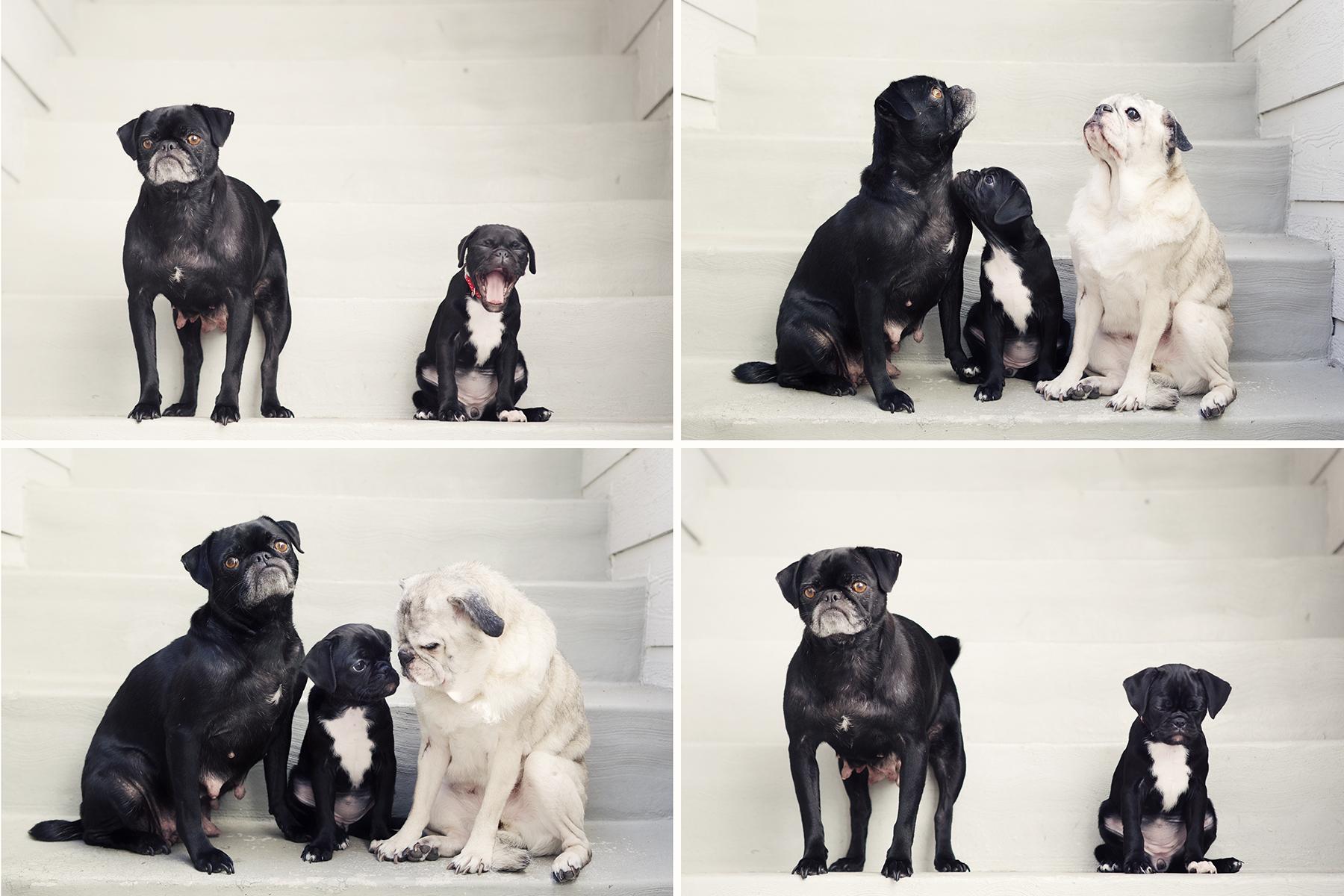 Piggy & pals Kristieleephotographer