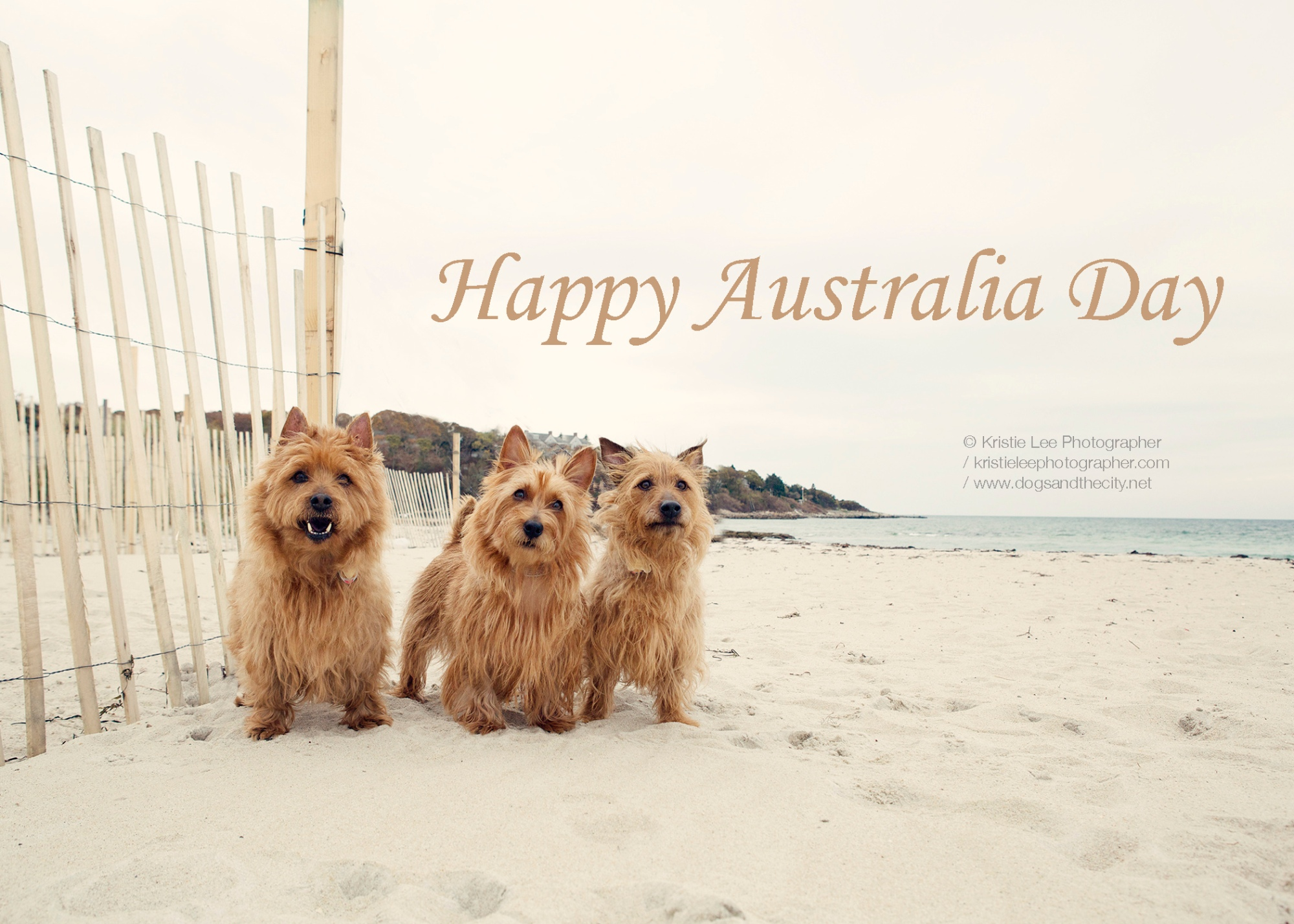 Happy Australia Day Kristieleephotgrapher