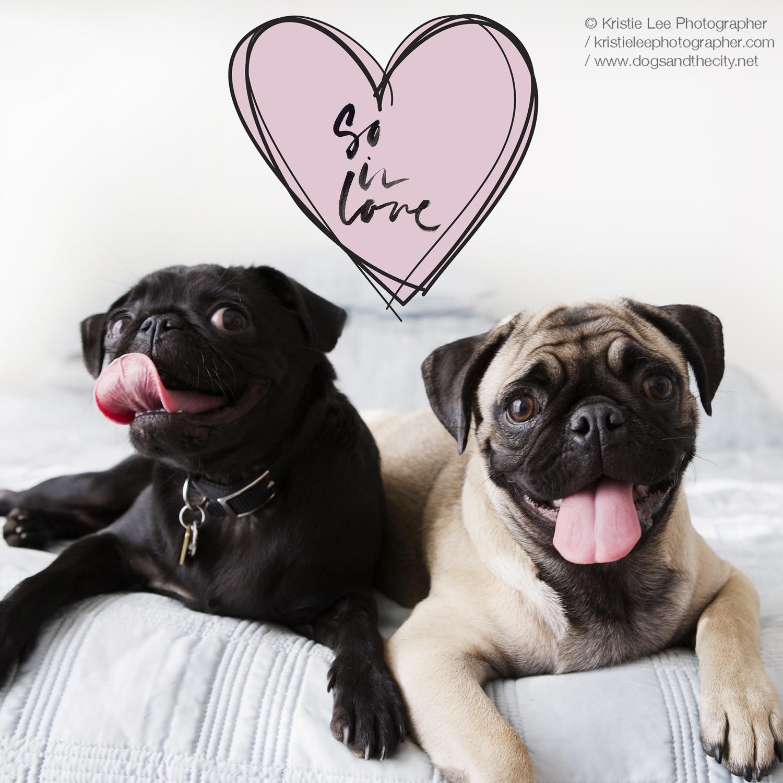Valentines poster Kristie-lee-photographer 1