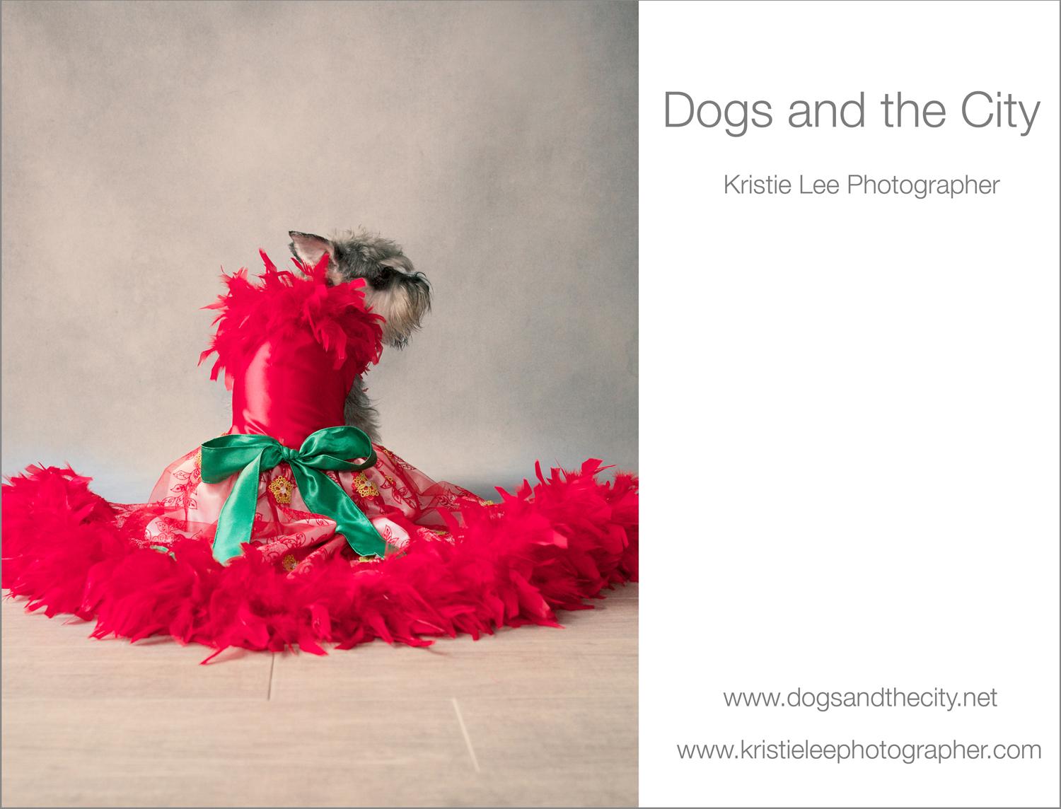 Venus dogs and the city kristie lee photographer