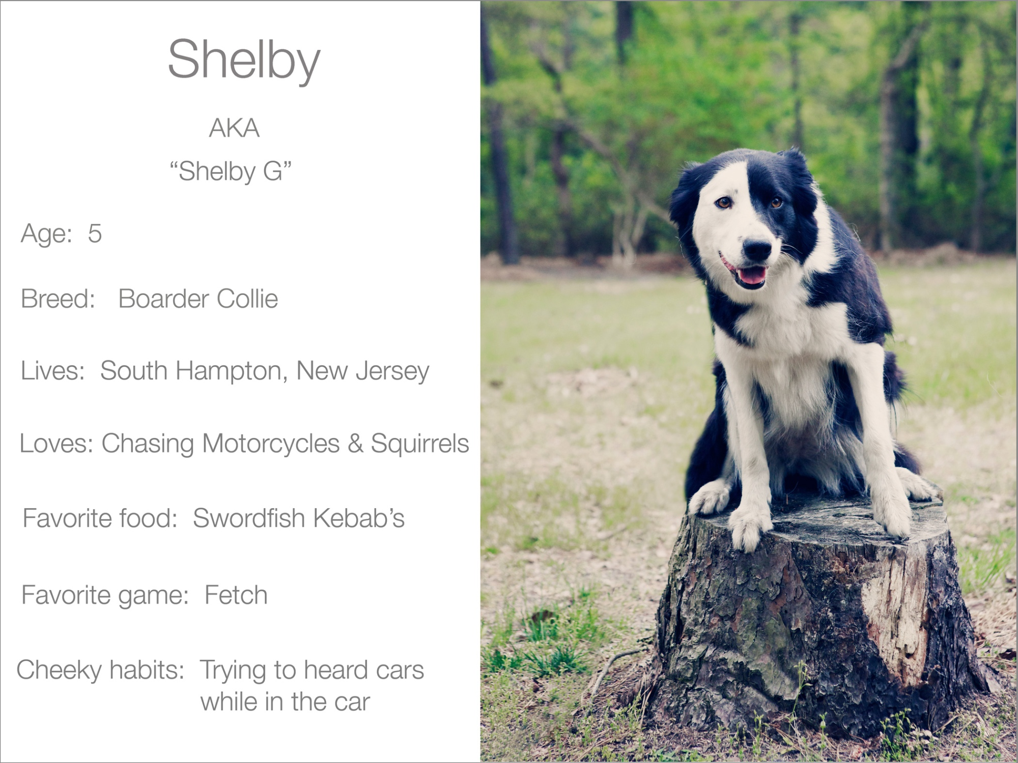Shelby profile  Kristie Lee Photographer