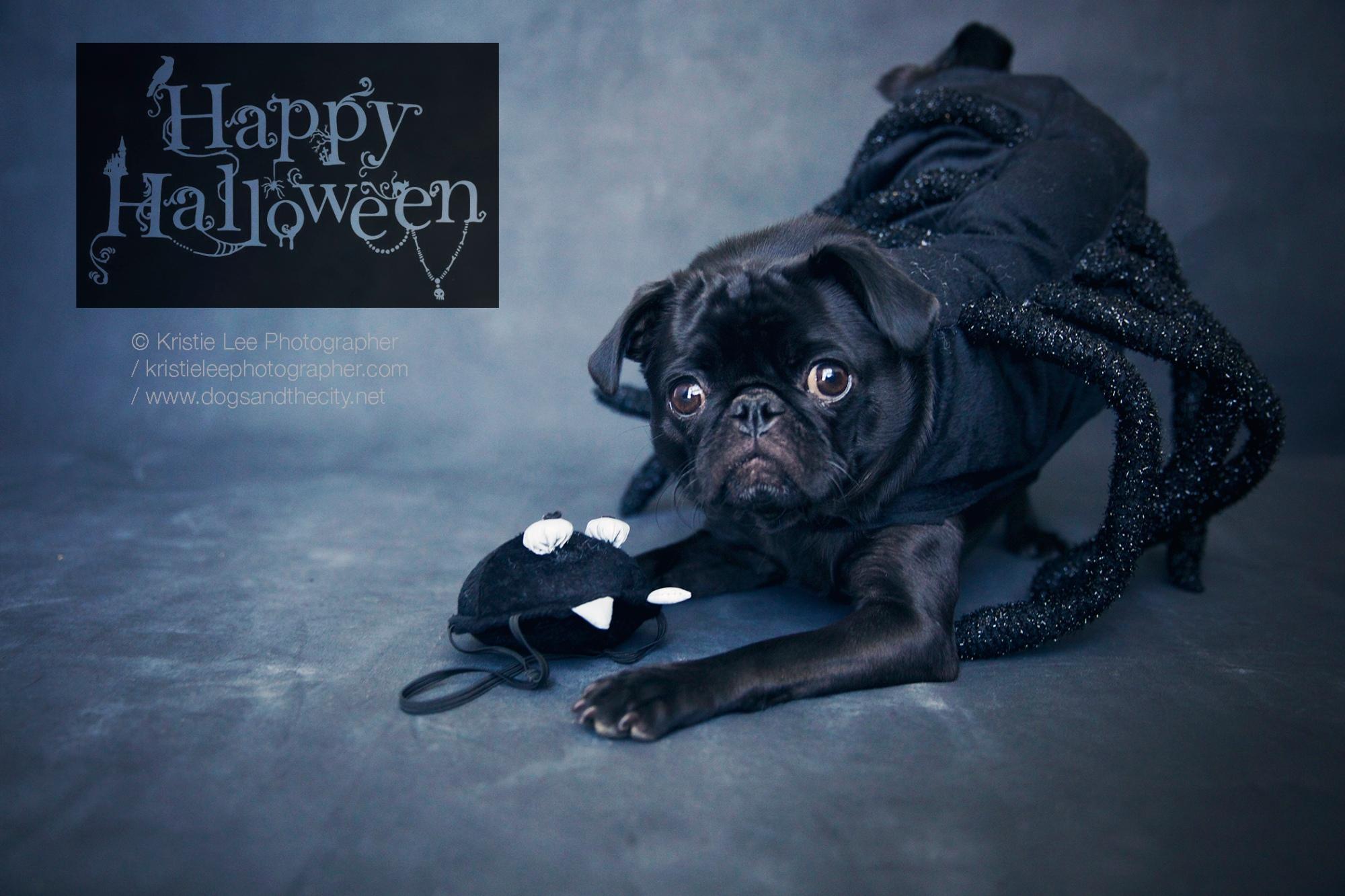 Cookie halloween kristie-lee-photographer