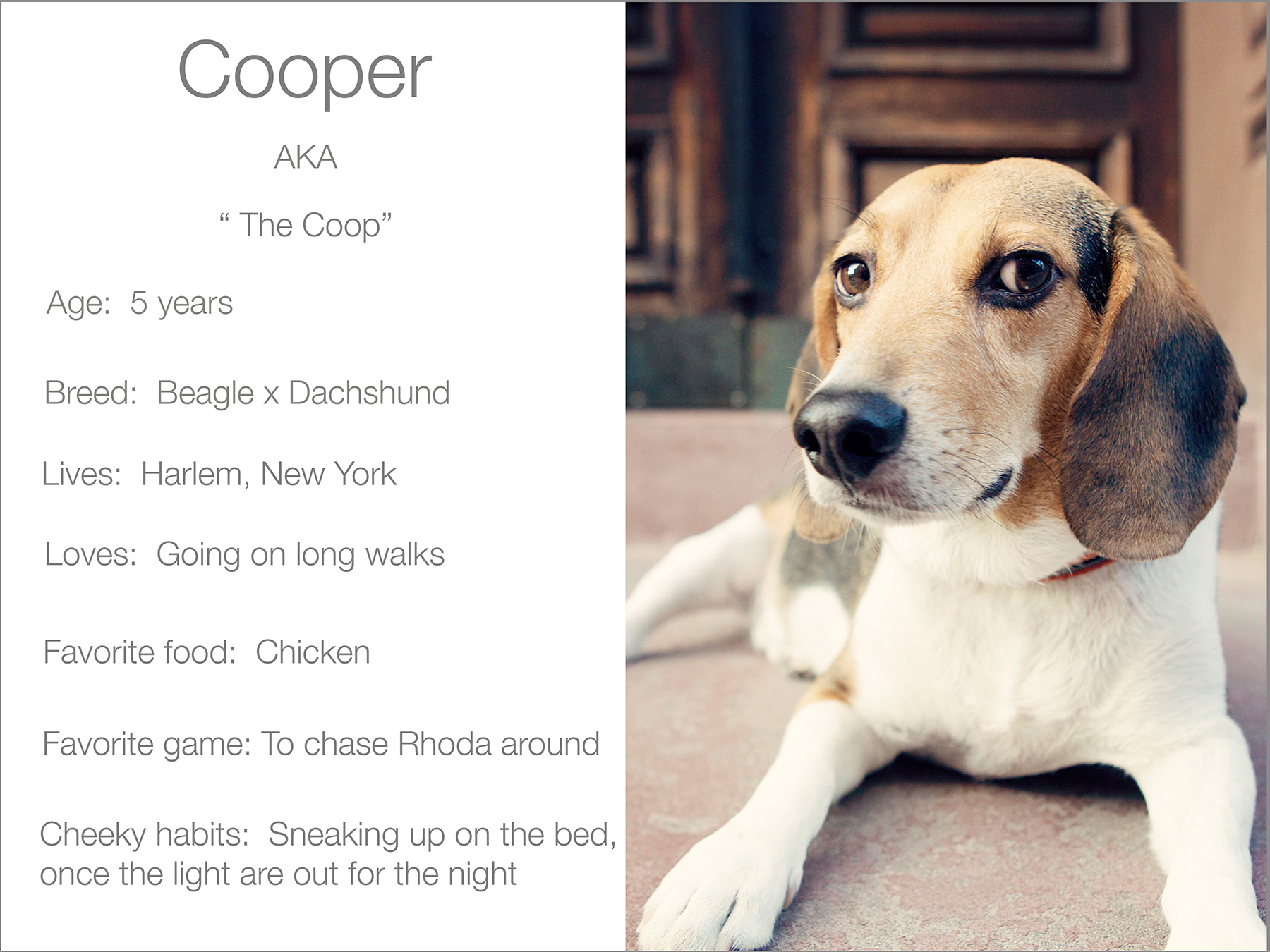 Cooper profile  kristie-lee-photographer