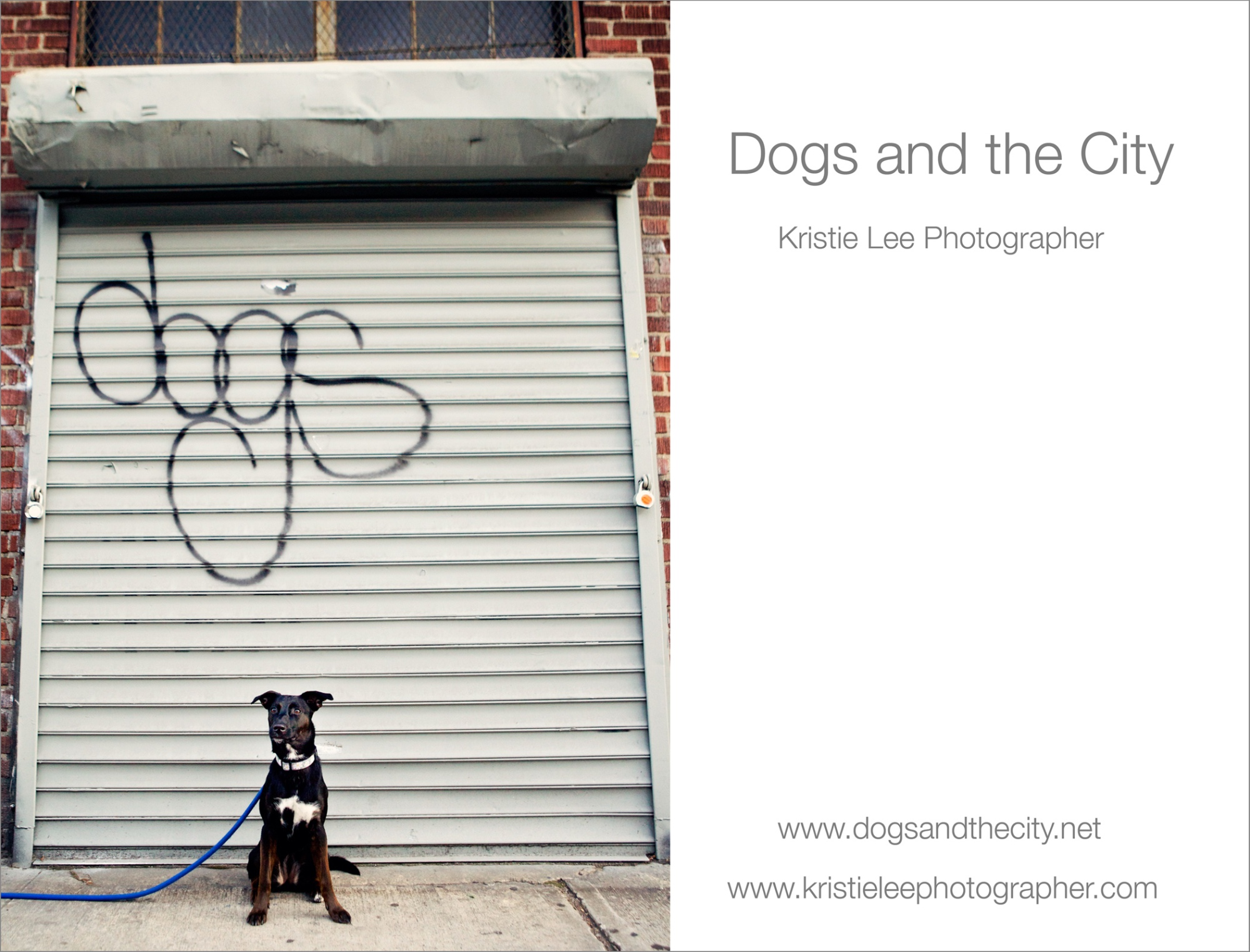 dogs and the city kristie lee photographer rosie