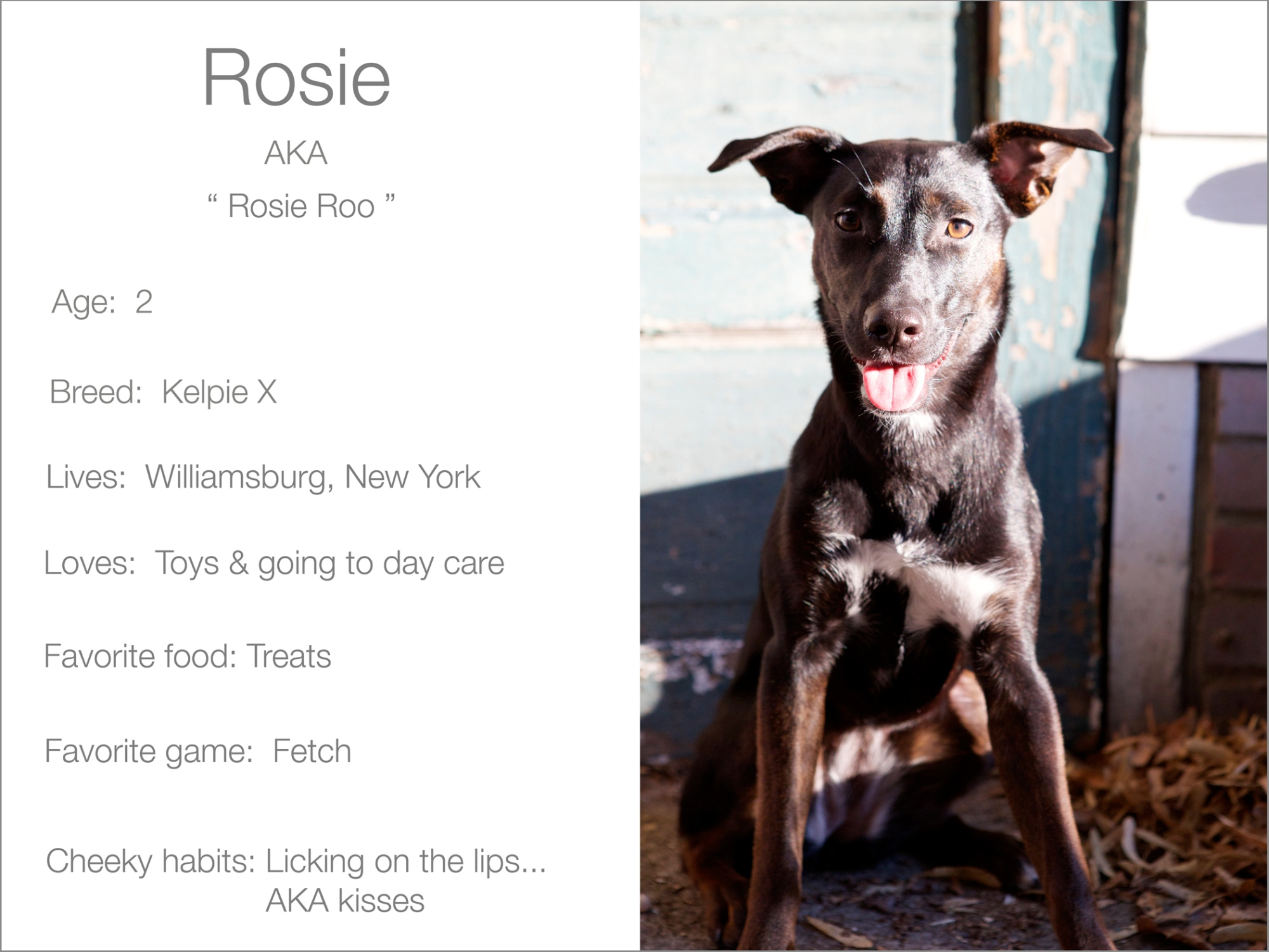 Rosie profile Kristie Lee Photographer