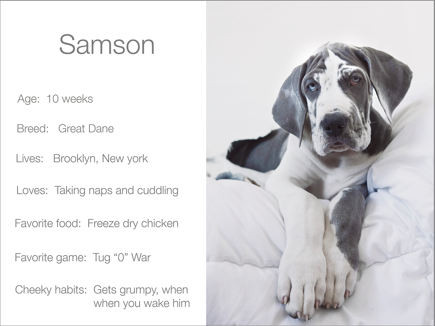 Samson-profile--Kristie-Lee-Photographer-web