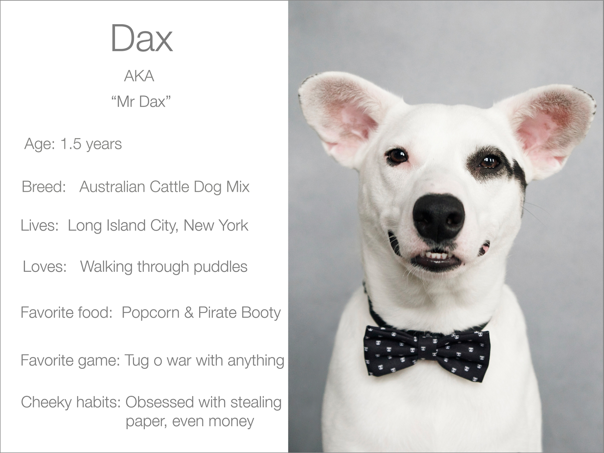 Dax profile  Kristie Lee Photographer