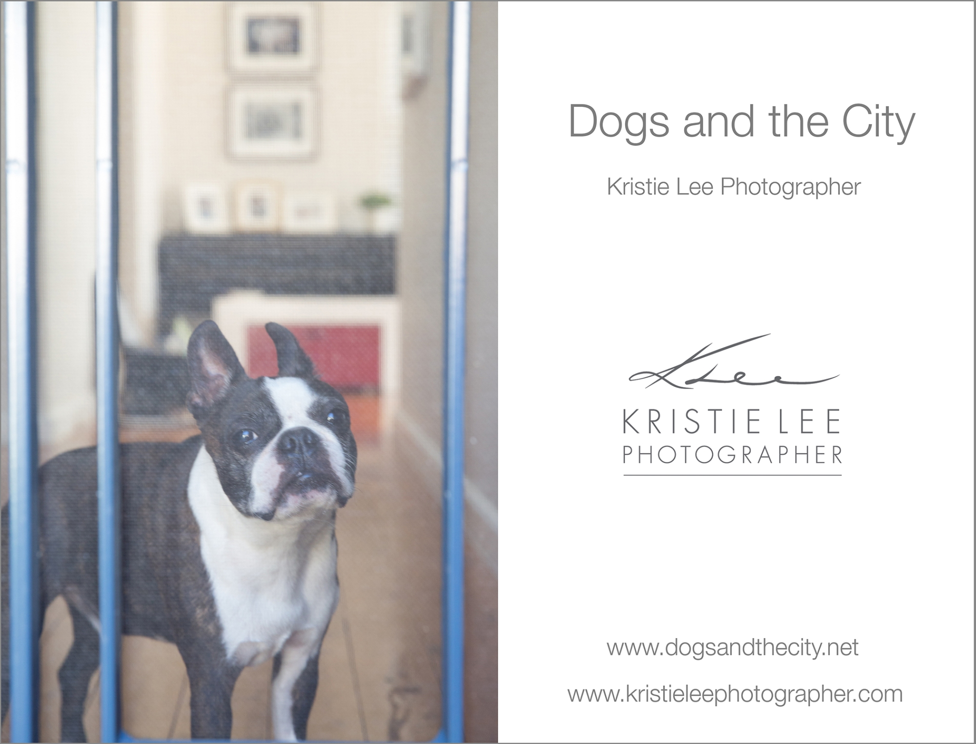 Gussy dogs and the city kristie-lee-photographer