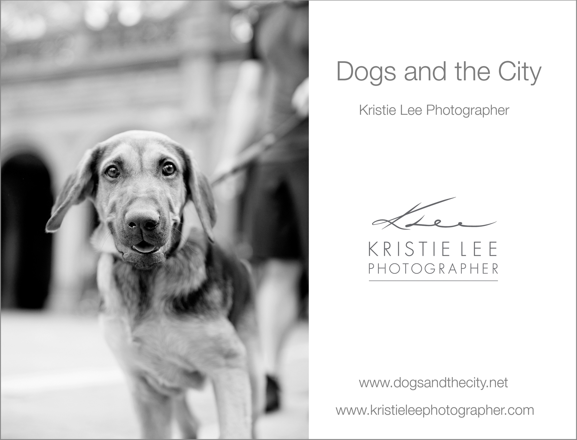 dogs_and_the_city kristie_lee_photographer maverick