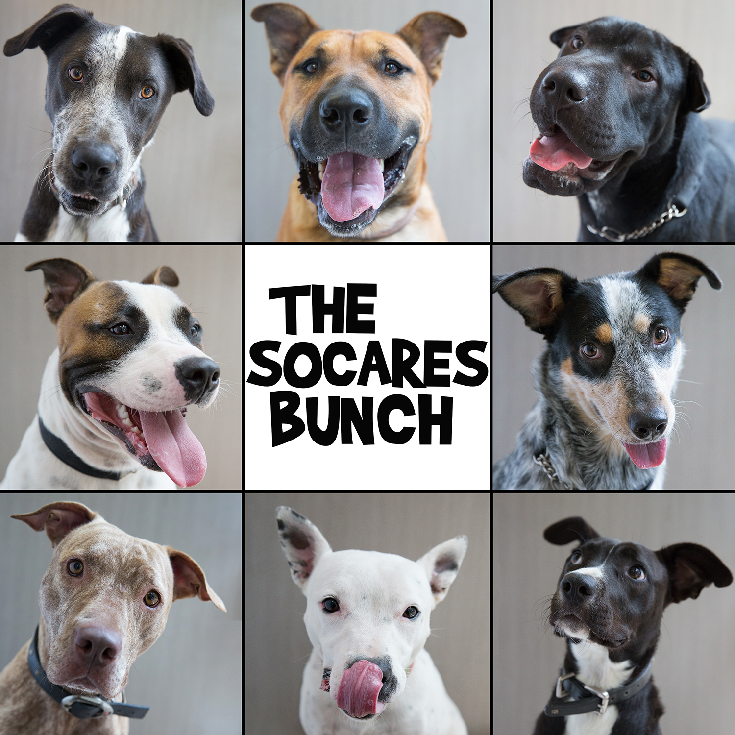 The socares bunch 2