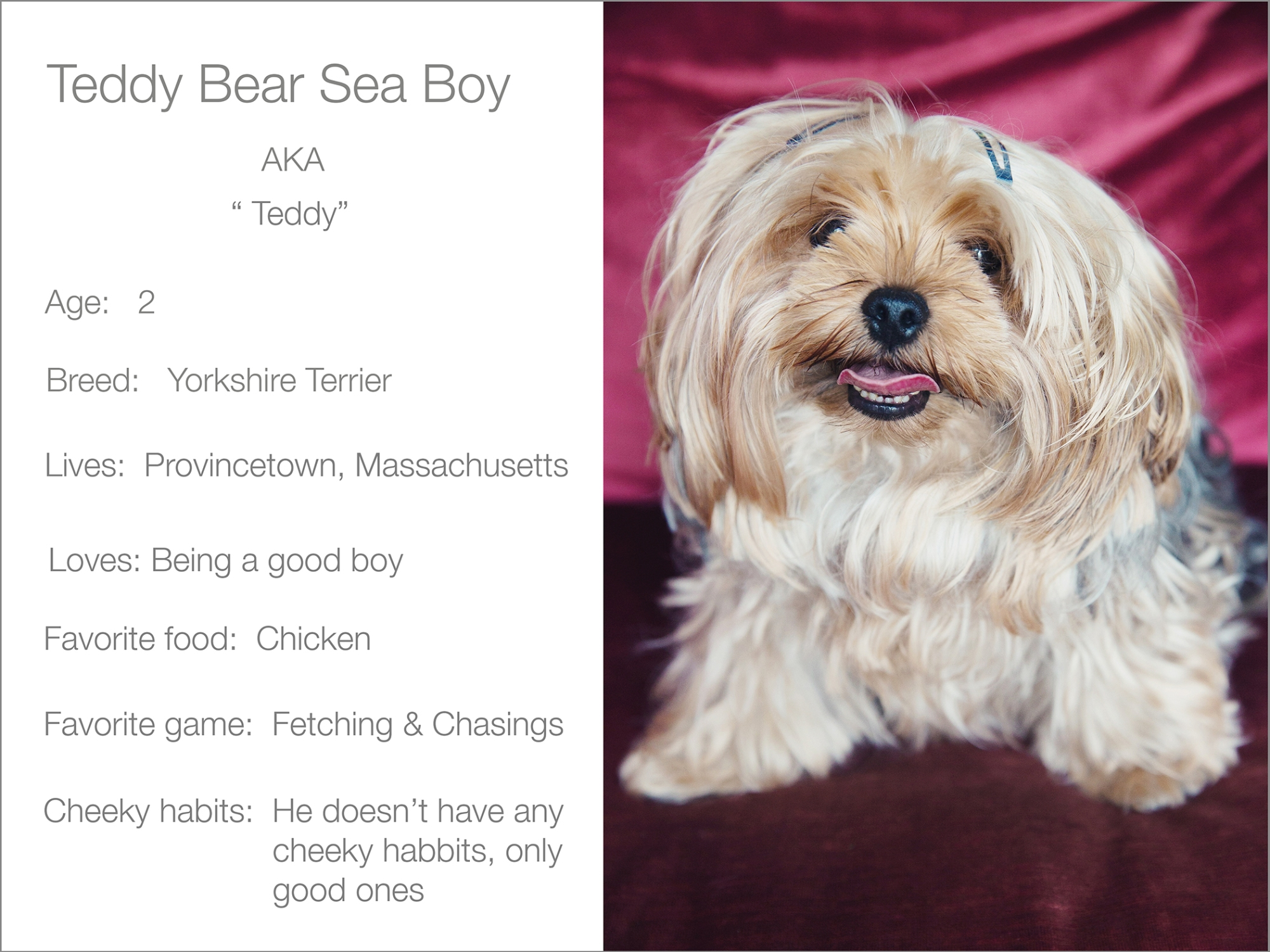 Teddy Bear profile dogs_and_the_city kristie_lee_photographer Charlie.jpg