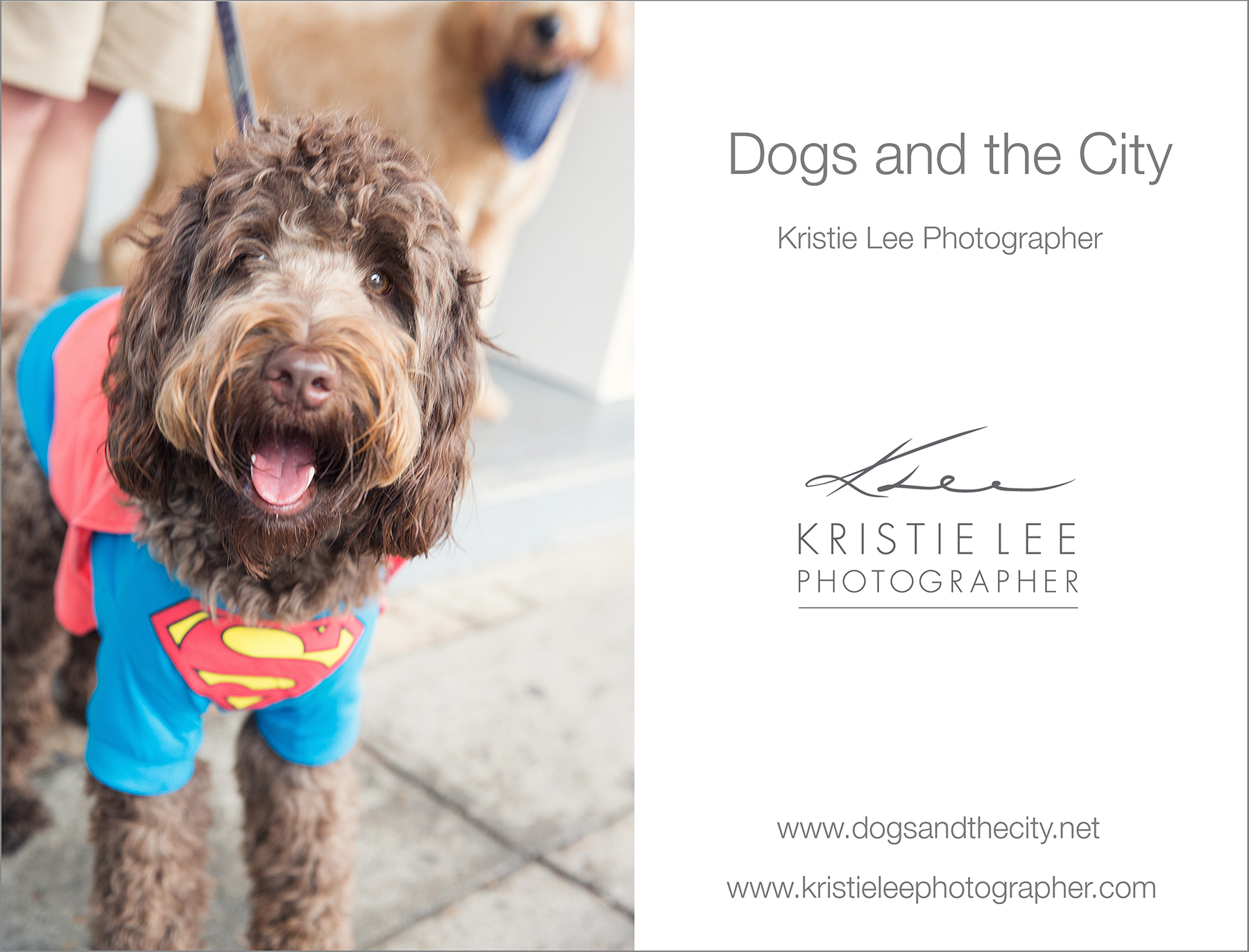 dogs_and_the_city kristie_lee_photographer dogue