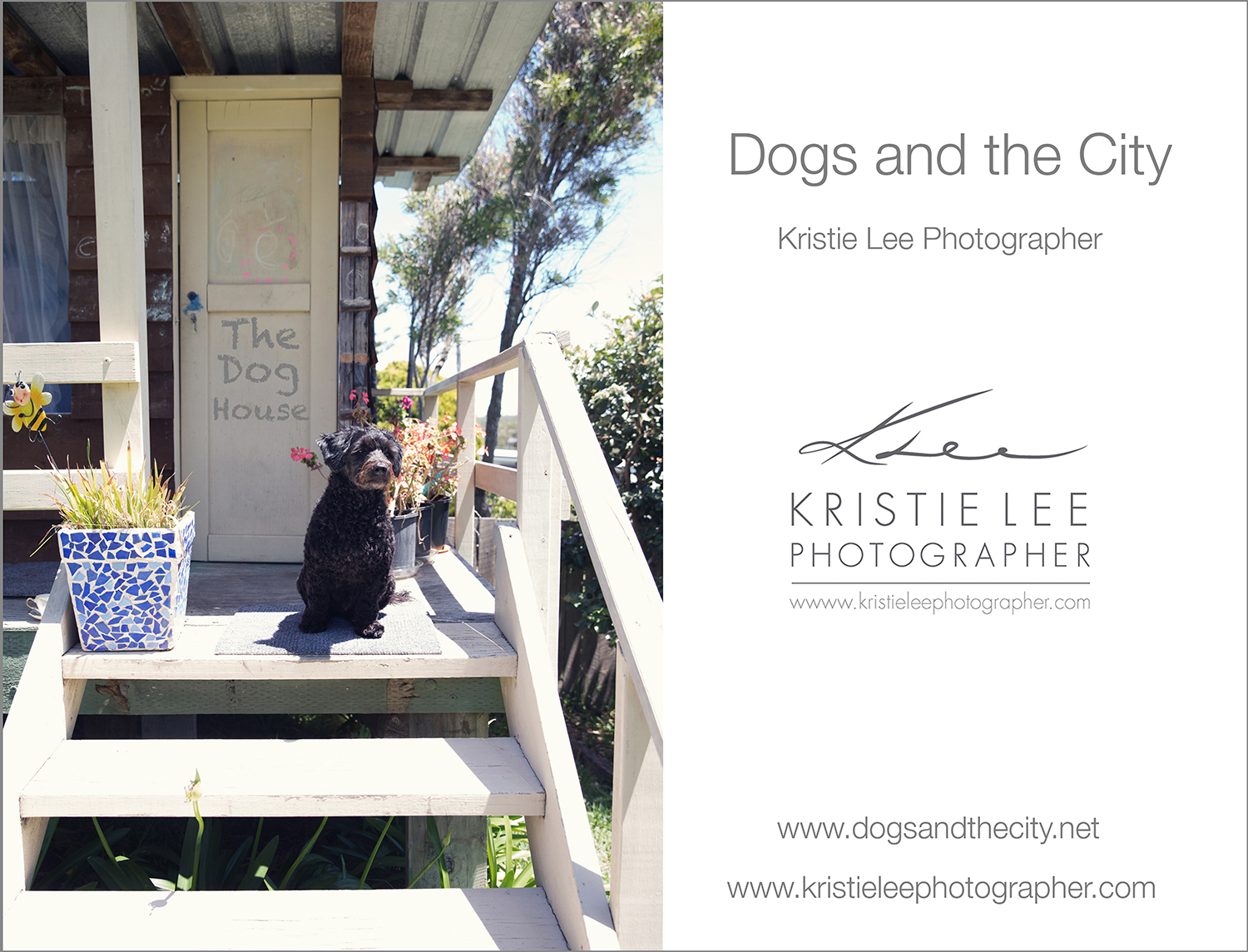 mako dogs_and_the_city kristie_lee_photographer