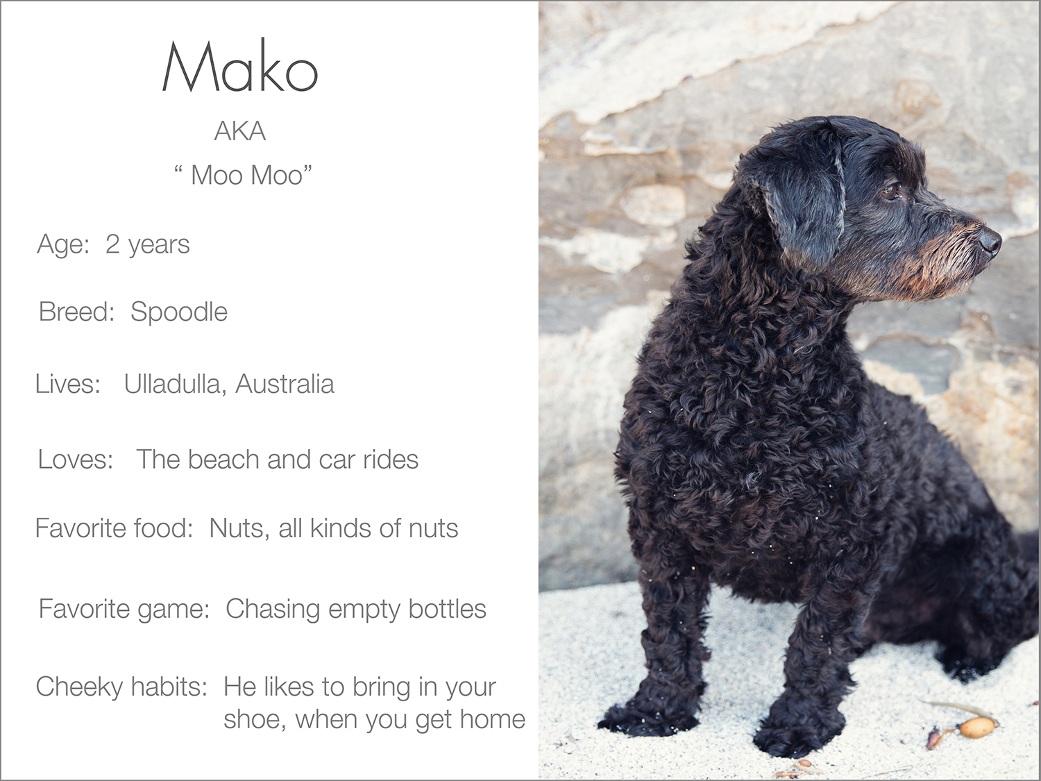 Mako profile dogs_and_the_city kristie_lee_photographer Charlie.jpg