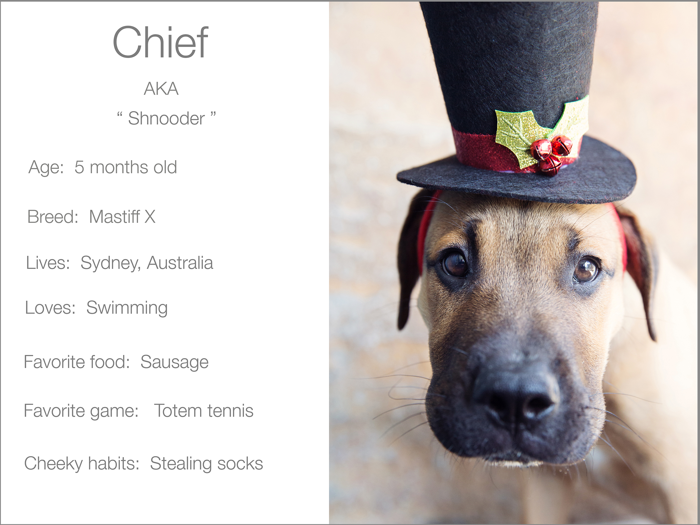 Chief profile dogs_and_the_city kristie_lee_photographer Charlie.jpg
