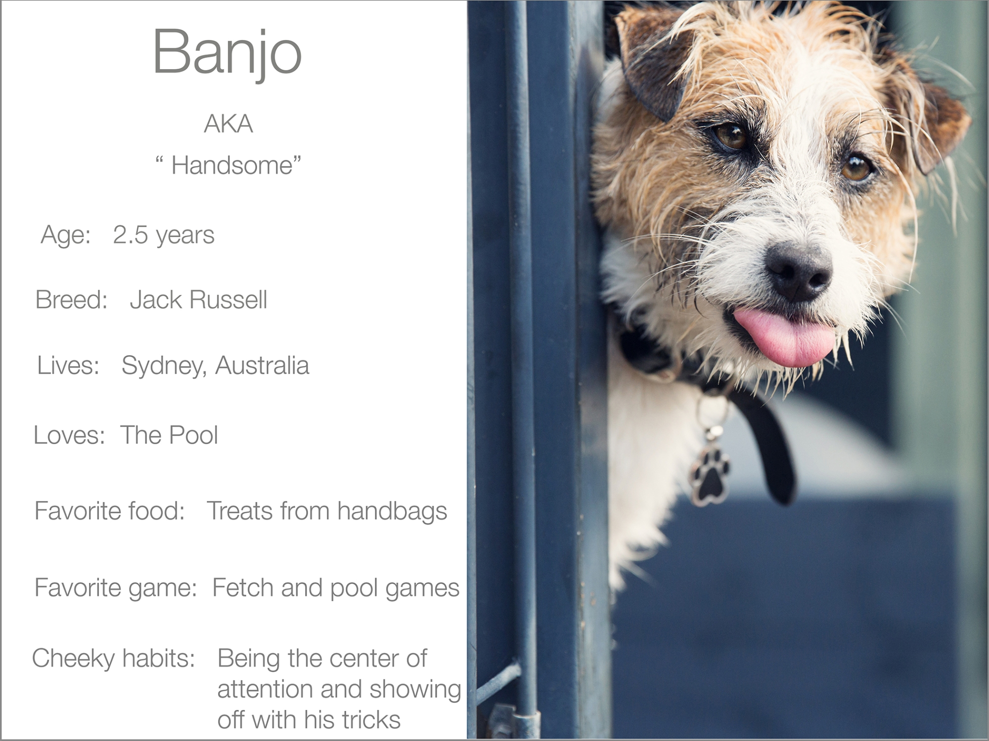 Banjo profile dogs_and_the_city kristie_lee_photographer Charlie.jpg