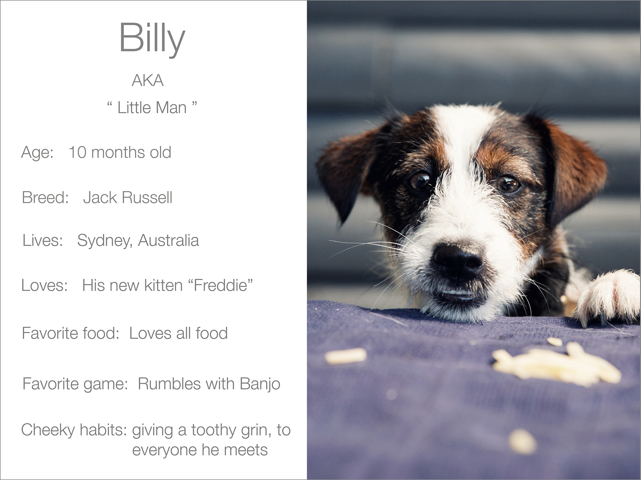 Billy profile dogs_and_the_city kristie_lee_photographer Charlie.jpg