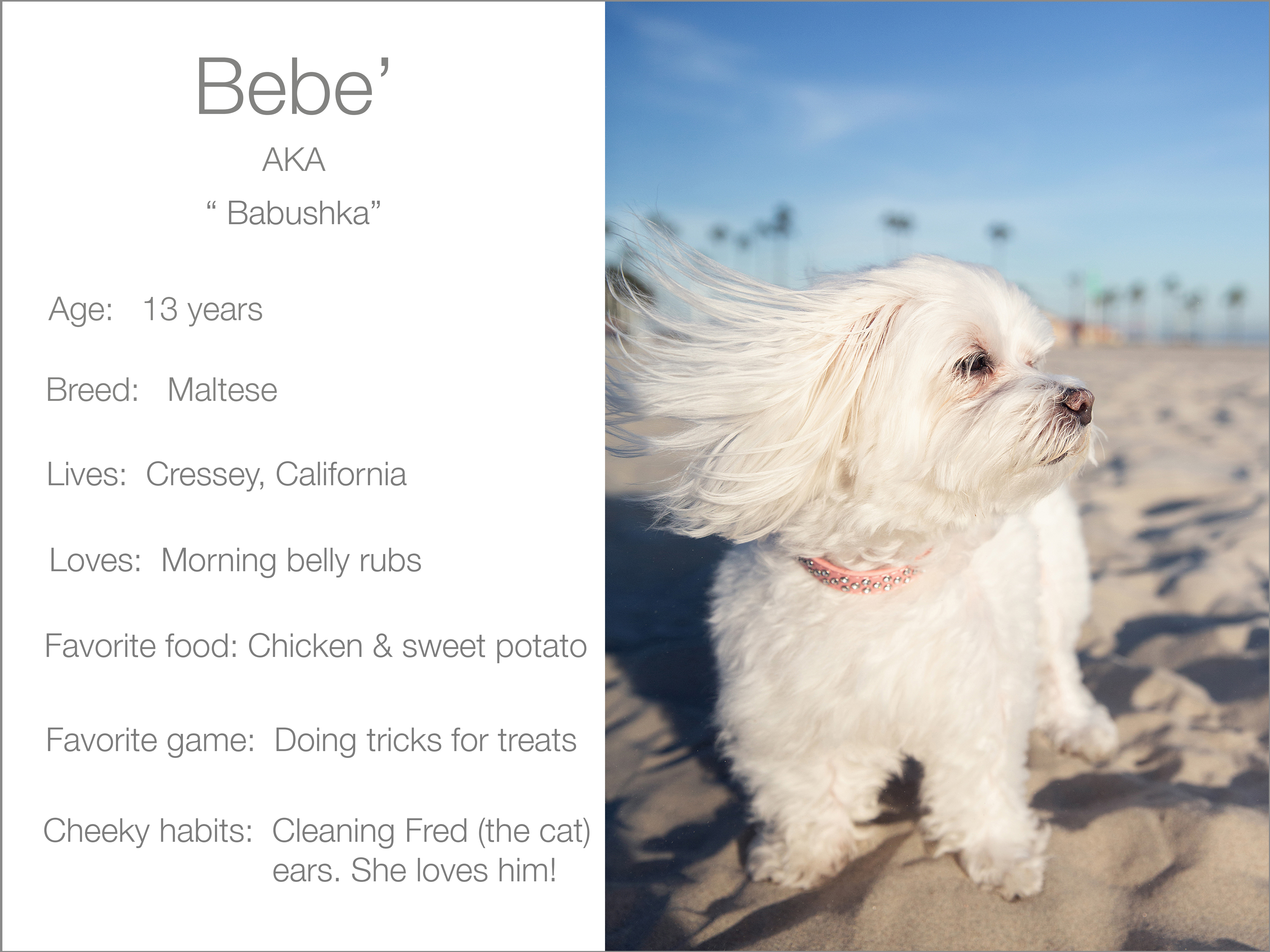 Bebe' profile dogs_and_the_city kristie_lee_photographer Charlie.jpg